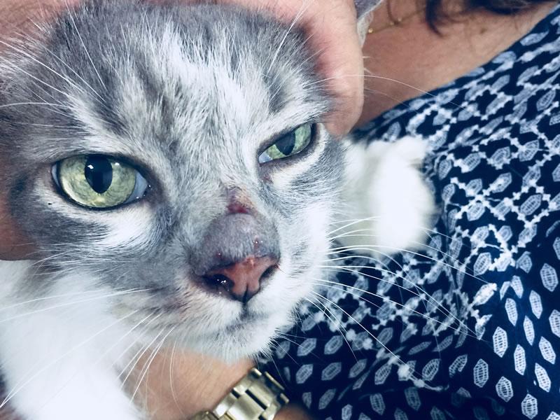 gato-antes